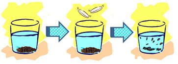 Esquema do processo observado no experimento de diminuição da densidade das uvas-passas.