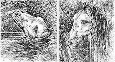 O que você vê na imagem? Um sapo ou um cavalo?