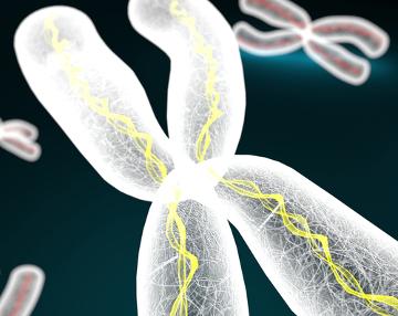 A Síndrome do X frágil está relacionada com a repetição de trinucleotídeos do gene FMR-1