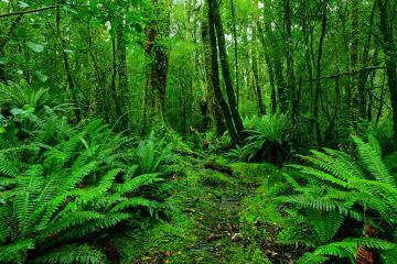 As florestas trazem benefícios ecológicos, econômicos e até mesmo sociais para todo o planeta