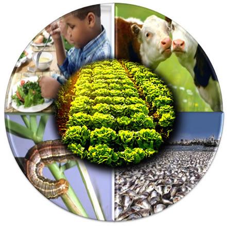 Para ser sustentável, a agricultura precisa atender não somente aos interesses econômicos, mas também ecológicos e sociais