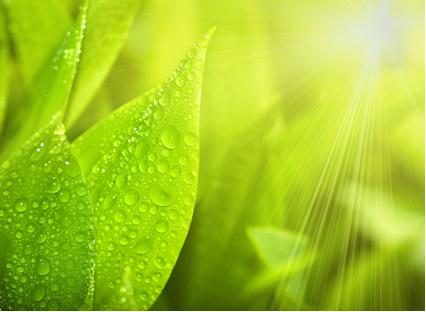 A fotossíntese nas plantas precisa de energia solar, água e gás carbônico