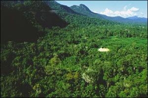 Floresta Amazônica - cobertura de origem equatorial