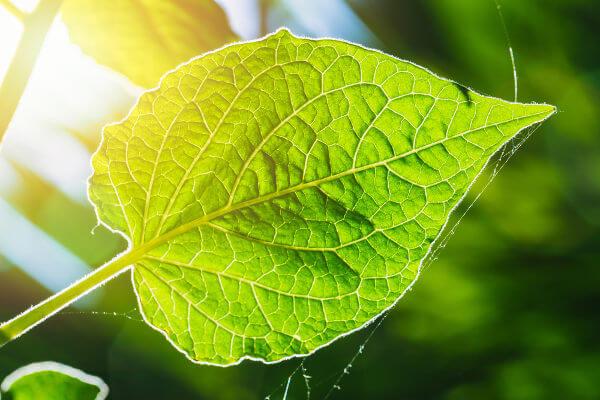 As plantas, por meio da fotossíntese, são capazes de sintetizar seu próprio alimento.