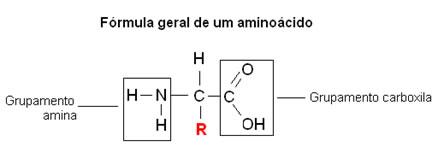 O aminoácido é formado por um grupo amina e um grupo carboxila.