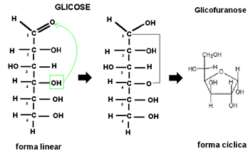 Ciclização da glicose, com formação da glicofuranose.