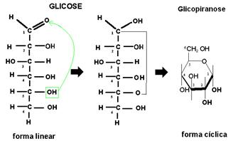 Ciclização da glicose, com formação da glicopiranose.