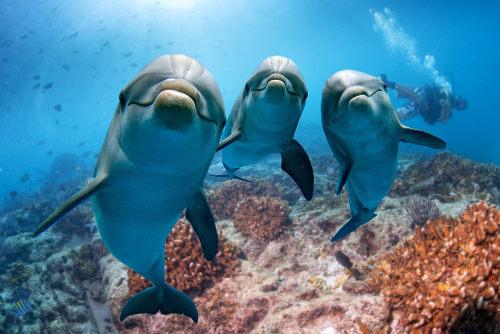 Golfinhos recorrem à ecolocalização para reconhecer o ambiente