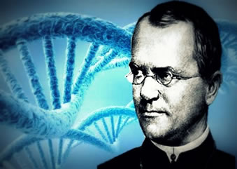 Gregor Johan Mendel: o pai da genética