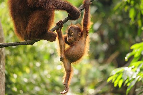 Indivíduos de uma mesma espécie são capazes de se reproduzir