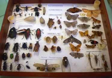 Insetário com várias espécies de insetos