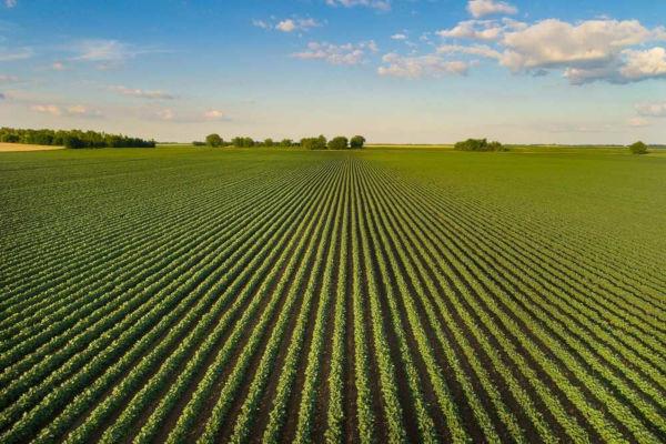 Latifúndios são grandes extensões de terra, que podem ser produtivas ou improdutivas.