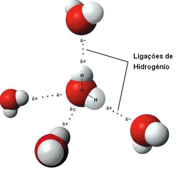 Esquema das ligações de hidrogênio da água no estado líquido