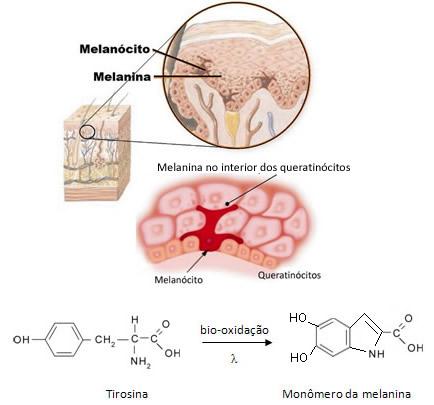 A melanina que dá o tom da pele é produzida no melanócito