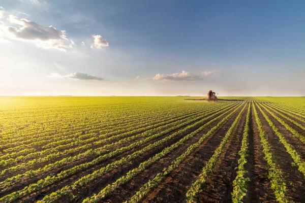 O cultivo de soja no Brasil representa uma das principais monoculturas do país.