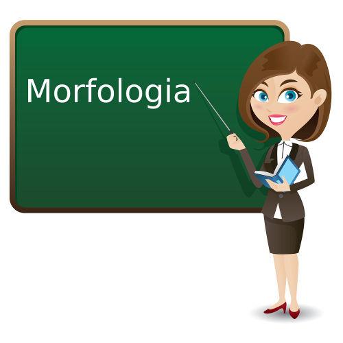 Morfologia é a parte da gramática da língua que estuda os morfemas.