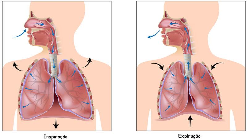 Na inspiração, ocorre a entrada do ar para os pulmões, enquanto na expiração ocorre a saída