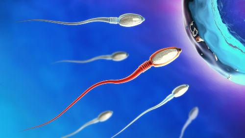 Na reprodução sexuada, os gametas unem-se para formar um novo ser