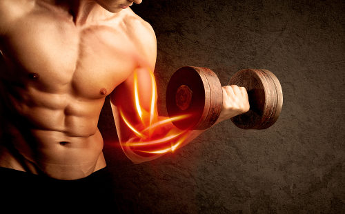 No músculo, o glicogênio funciona como uma reserva utilizada na fabricação de energia para a contração muscular