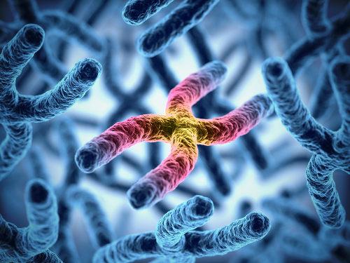 Nos cromossomos estão localizados os genes, a unidade da hereditariedade