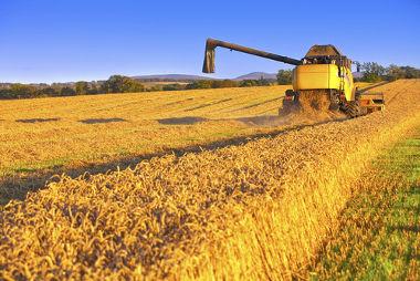 O agronegócio envolve a produção agropecuária e as práticas a ela interligadas