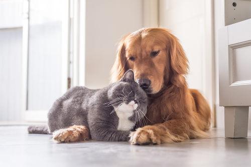 O cachorro e o gato são exemplos de organismos de espécies diferentes