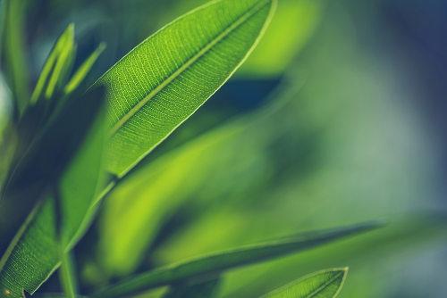 O Ciclo de Calvin ocorre em plantas no processo de fotossíntese