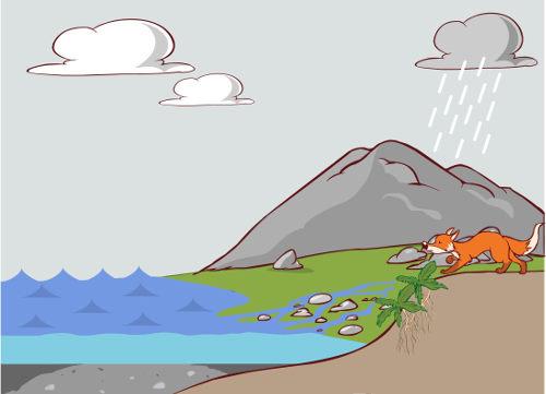 O ciclo do fósforo envolve intemperismo, vegetais, animais e micro-organismos
