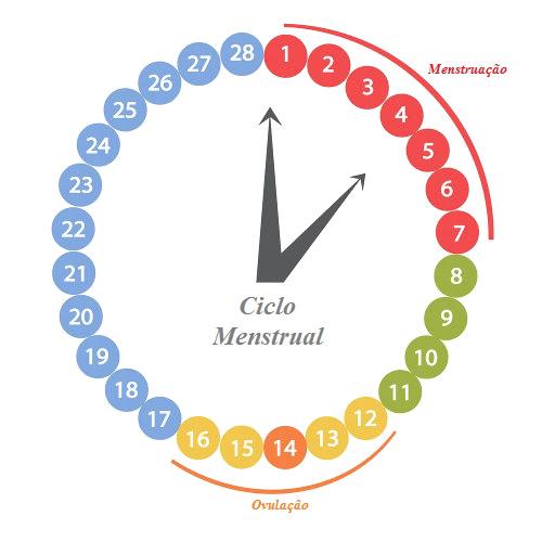 O ciclo menstrual da mulher normalmente dura 28 dias