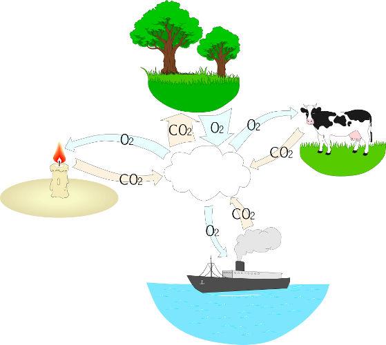 O ciclo do oxigênio está diretamente relacionado com o ciclo do carbono.