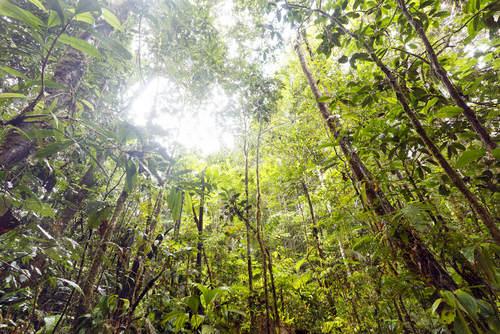 O clima equatorial é responsável por manter uma vegetação densa e sempre verde