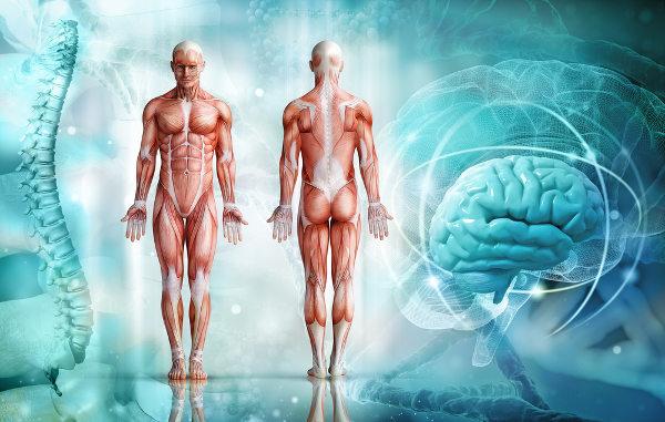 O corpo humano é formado por uma grande quantidade de células.