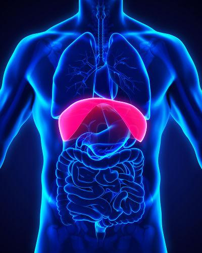 O diafragma está localizado entre a cavidade torácica e a abdominal