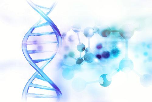O DNA é responsável por todas as características de um indivíduo