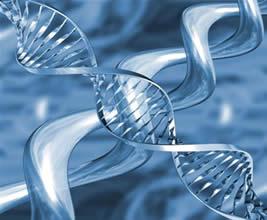 O duplo filamento complementar da molécula de DNA.