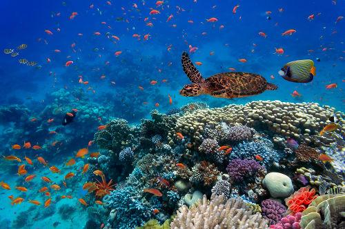 O ecossistema envolve seres vivos e fatores abióticos
