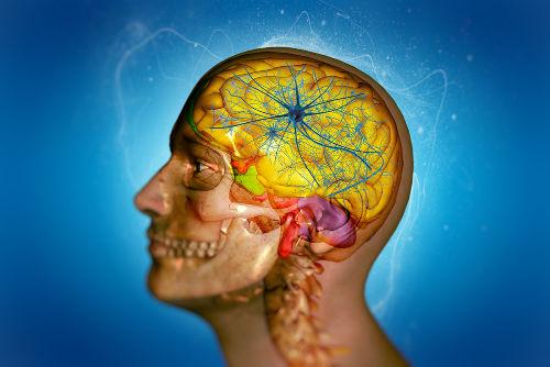 O encéfalo é uma porção complexa do Sistema Nervoso Central