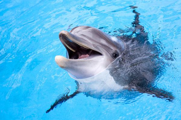 O golfinho é um exemplo de animal pertencente ao grupo dos mamíferos.