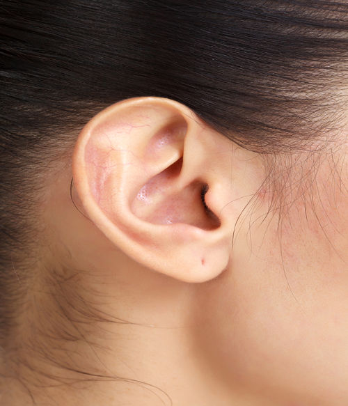 O órgão dos sentidos responsável pela audição é a orelha.