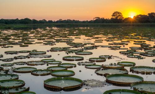 O pantanal é um dos biomas do Brasil