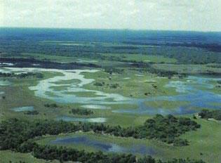 O pantanal é um rico domínio vegetal brasileiro.