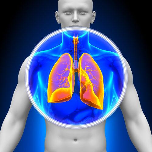 O pulmão é um dos órgãos do sistema respiratório