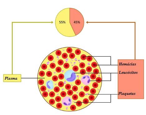 O sangue é formado por plasma e elementos celulares