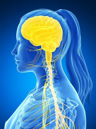 O sistema nervoso central é formado pelo encéfalo e medula espinal