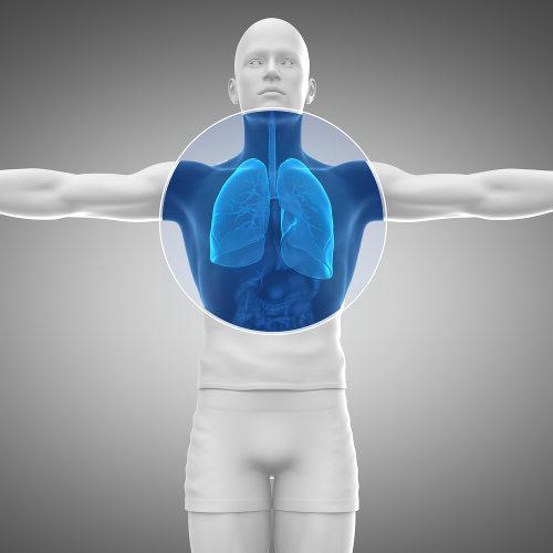 O sistema respiratório é o responsável por realizar a respiração pulmonar