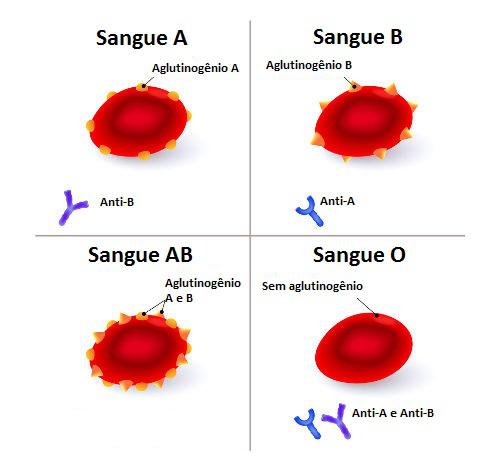 Observe os diferentes tipos sanguíneos e suas aglutininas e aglutinogênios