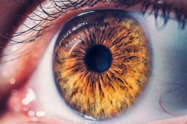 O olho é uma estrutura complexa relacionada com nossa visão
