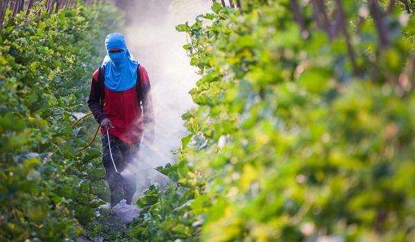 Os agrotóxicos podem causar danos ao solo, água e ar