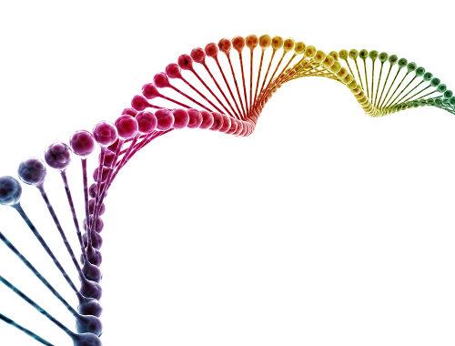 Os alelos são genes que ocupam o mesmo locus em cromossomos homólogos e podem ser dominantes ou recessivos