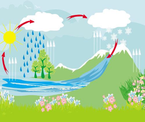 Os ciclos biogeoquímicos garantem que um elemento fique sempre disponível